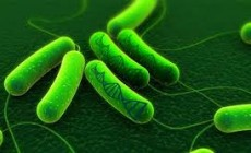 New Biosensors  That turns Bacteria Into source of Natural Energy
